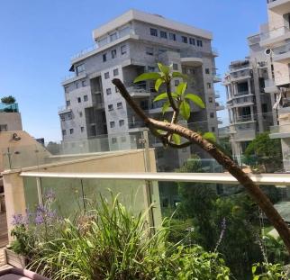 הגבהת מעקה למרפסת (7)