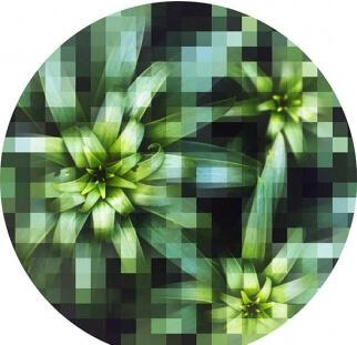 קולקציית פרחים על זכוכית